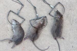 2 X Pièges à Souris Rat Strong Snap Catch Lutte Antiparasitaire Camping Aventure Survie-afficher Le Titre D'origine