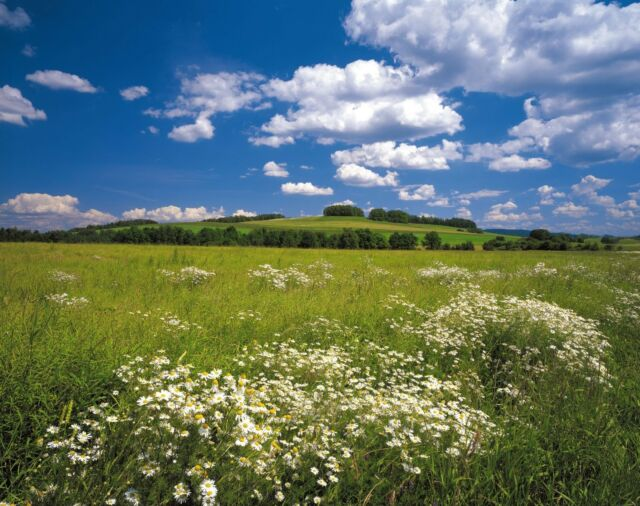 MEADOW Photo Wallpaper Wall Mural GREEN NATURE SKY Made in Germany! 368x254cm