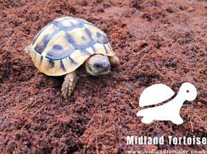 Tortoise-substrate-coir-soil-calcium-rich-10l-TortoiseMIX-MidlandTortoise