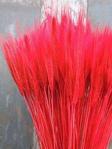 25 pcs séché Orge Tiges de fleurs mariage Arranging prêt à utiliser Rouge Bouquet-afficher le titre d`origine u319bHP6-07184917-808526581