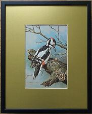 Basil Ede, 20''x16'' frame, Framed Bird wall art, Spotted Woodpecker print