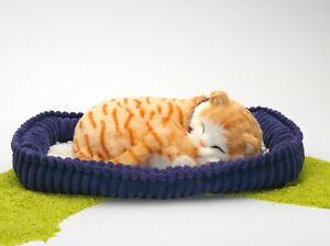 Perfect-Petzzz-Plueschtier-Katze-Kater-Tabby-orange