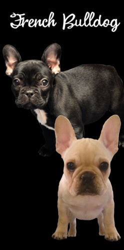 "French Bulldog Puppies Dog Beach Bath Towel 30/"" x 60/"" Dogs Velour"