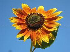 FLOWERS NATURE PLANT FLOWER MACRO ORANGE PETAL STAMEN POSTER ART PRINT BB4706A
