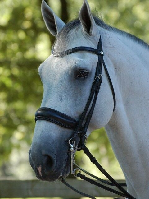Dyon Curb Kandarenzaum with Swedish riding halter