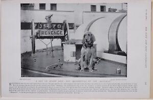 1896 Boer War Era Der Bluthund Of The Revenge Haustier On Board Schiff