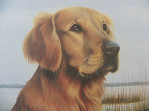Golden-Retriever-Print-Louis-Frisino-Ltd-Edn-104-1500