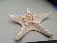 Natural  beautiful Starfish 16 cm