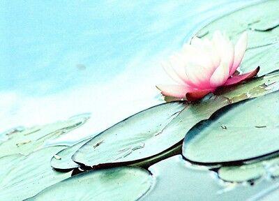 (10990) Postcard - Water Lilies Elegante Verschijning