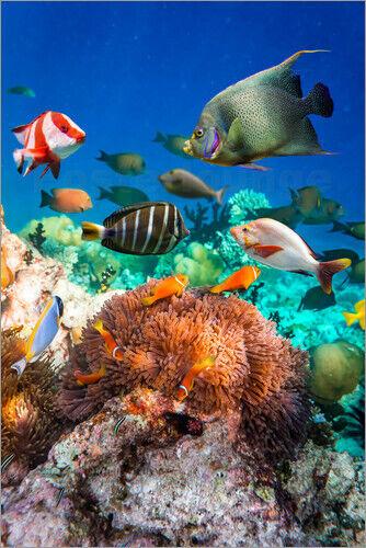Acrylglasbild Korallenriff auf den Malediven