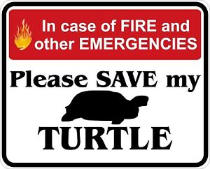 In-Case-of-Fire-Save-My-Turtle-Decals-Stickers