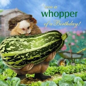 Image Is Loading Funny Guinea Pig Birthday Card What A Whopper