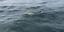 FISHING TACKLE BAIT LURES TUNA STRIPED BASS KING FISH YELLOWTAIL BLUE FISH JACK