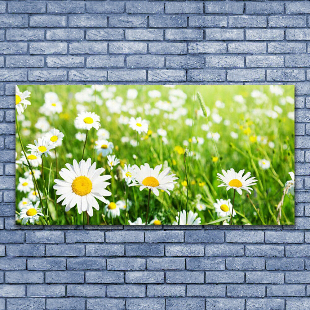 Print on Glass Wall art 140x70 140x70 140x70 Picture Image Daisy Floral 086cc8
