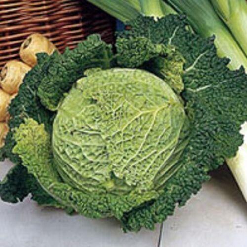 Gemüse Palmetto F1 Capriccio Wirsing 20 Samen