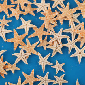 100Pcs Cute Small Mini Starfish Lot Sea Star Shell Beach Deco Craft DIY Making
