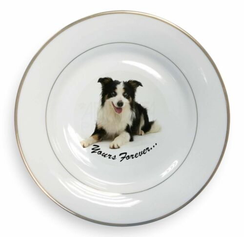 AD-BC36PL Border Collie Dog /'Yours Forever/' Gold Rim Plate in Gift Box Christma