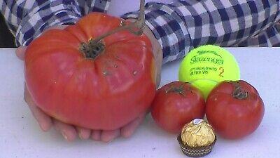 NON GMO Organic seeds XXL Tomato seeds Huge Tomato