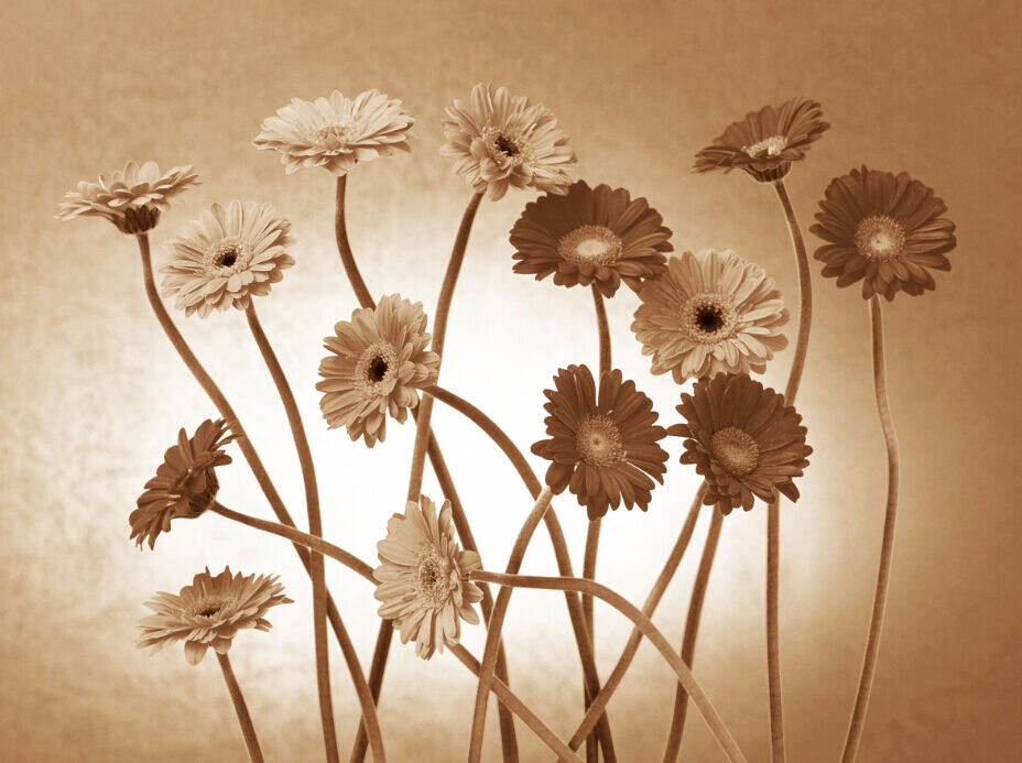 3D Fleur Dlicate 2 Photo Papier Peint en Autocollant Murale Plafond Chambre Art