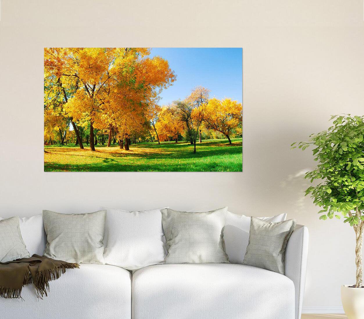 3D Helle Goldene Bäume Wiese 84 Fototapeten Wandbild BildTapete AJSTORE DE Lemon