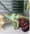 Reptile Lizard Harness Leash Adjustable Pet Small Animal Durable Leather Rope