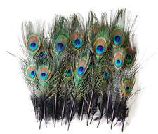 "25 Pcs MINI PEACOCK Feathers BLACK 2-9"" Trim/Hat/Costume/Bridal/Invitations"