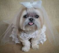 Wedding Flower Girl Dog Pet Dress & Veil X-small (new With Tags)