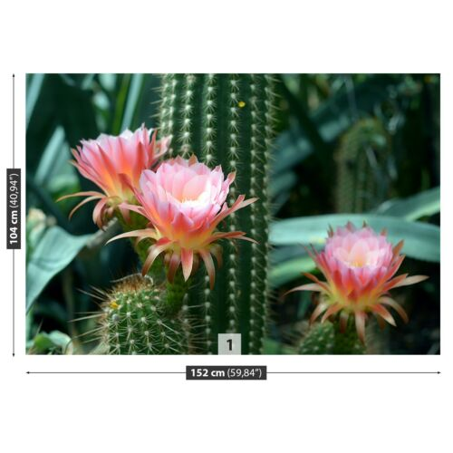 Details about  /Non woven Wall Mural Photo Wallpaper Poster Picture Image Cactus Flower