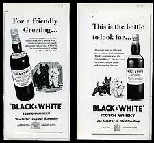 SCOTTISH TERRIER WEST HIGHLAND WHITE Westie Scottie DOG Black & White Whisky Ads