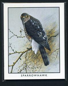 British Birds Of Prey Collectors Cards Sparrowhawk Hobby Falcon Merlin Images Ebay