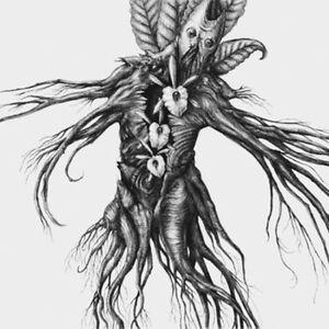 Botanist-IV-Mandragora-CD-2013-digifile-experimental-metal