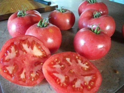 la Tomate rose de Berne ancienne 30 graine jardin Bio Bretagne graine paysanne 5