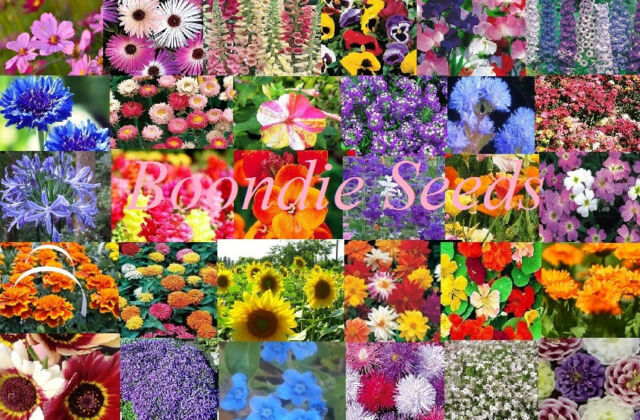 FLOWER GARDEN COLLECTION 30 x Packets over 2000 seeds EASY TO GROW flower pack