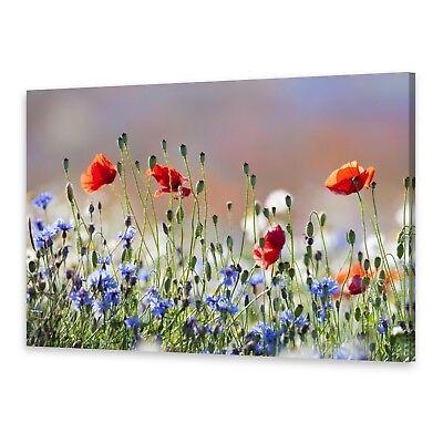 Leinwand-Bilder Wandbild Canvas Kunstdruck 100x50  Mohnblumen Pflanzen