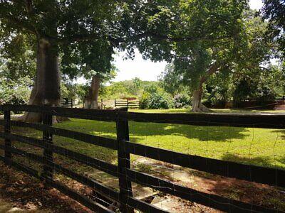 Remato Rancho 572 Hectareas es Propiedad en Hopelchen con 450 mecanizadas planada Oportunidad Urge