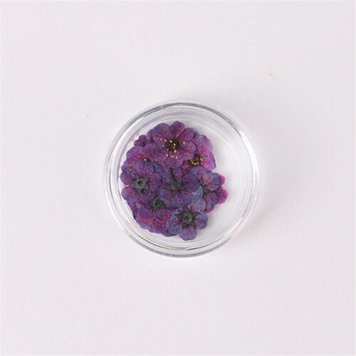 20 un.//Set secado Spiraea Flor para 3D UV Gel Acrílico Uñas Punta Hágalo usted mismo Decoración