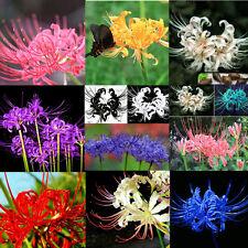 5PCS Lycoris Radiata Spider lily Bulb Seeds Home Garden Flower Bulbs Seeds