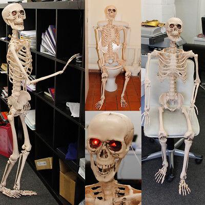 5ft Glow in the Dark Skeleton 50cm Halloween Fancy Dress Hanging Decoration Prop