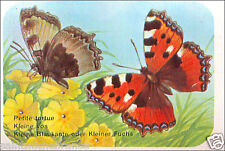 Petite tortue Aglais urticae Small tortoiseshell Butterfly IMAGE CARD 60s