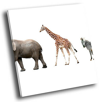 Square Animal Photo Canvas Wall Art Picture Prints Blue Black Africa Giraffe