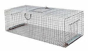 Piege-Pigeon-Bande-Reflechissante-Thermocollante-Thermofusible-Vivre-de