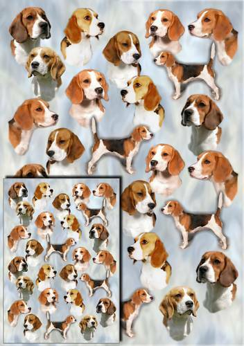 One sheet plus matching gift card Beagle Dog Gift Wrapping Paper By Starprint