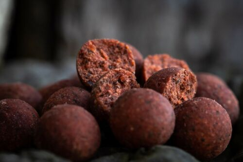 Spotted Fin Shelf Life Smokey Jack Boilies