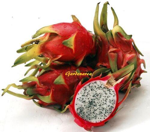 22 Graines Hylocereus Undatus Pitaya Dragon Fruit White Flesh seeds