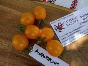 Aurantiacum-Tomate-Tomato-5-Samen-Saatgut-Seeds-Gemuesesamen