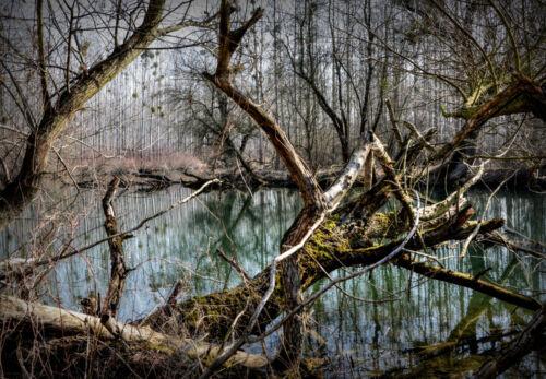 SPOOKY FOREST LANDSCAPE POSTER PRINT 24x36 HI RES 9 MIL PAPER