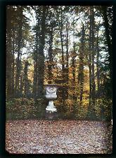 Autochrome Le sous bois 1920
