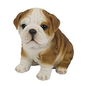 Details about Sit Up Cute Chubby English Bulldog Puppy Dog Pet Pal 6