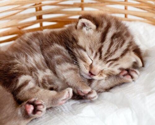 Funny Sleeping Baby Cat Kitten in Basket Cute Animal Art Poster 22/'/' x 18/'/'