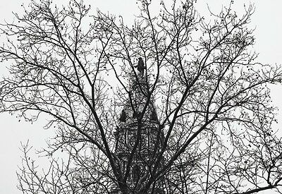 branches City Hall by Erin Clark PHOTO POSTER 13x19 PHILADELPHIA ART PRINT